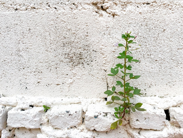 균열 벽에서 자라는 작은 식물