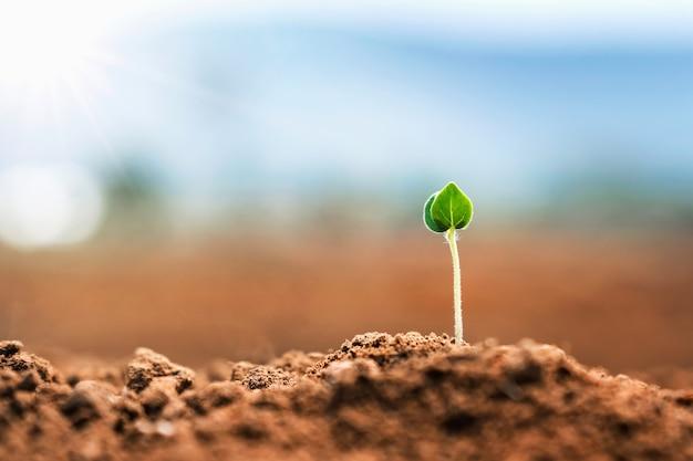 자연의 흙에서 자라는 작은 식물