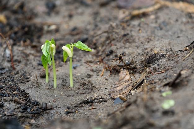 Небольшое растение растет из почвы в естественной среде после дождя