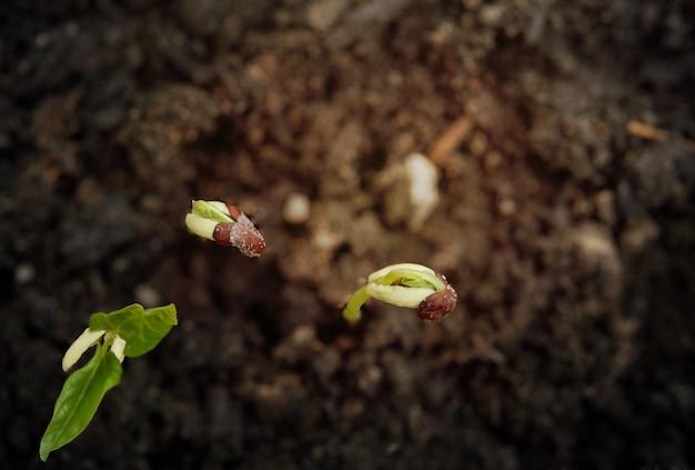 Небольшое растение растет из почвы в свете надежды, успешной концепции