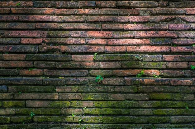 오래 된 붉은 갈색 벽돌 벽 질감 배경에 작은 식물 성장.
