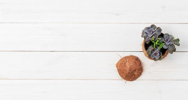 Небольшое растение в кокосовом горшке на белой деревянной поверхности
