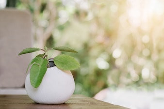Small plant in a pot displayed in the wooden table with sun ray