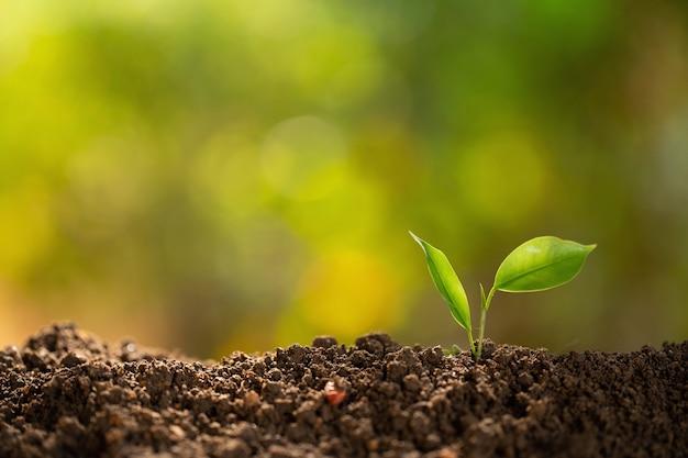 토양 더미에 작은 식물. 새로운 삶. 성장하는 나무 지도자 나무 심기 trees.save 세계 개념