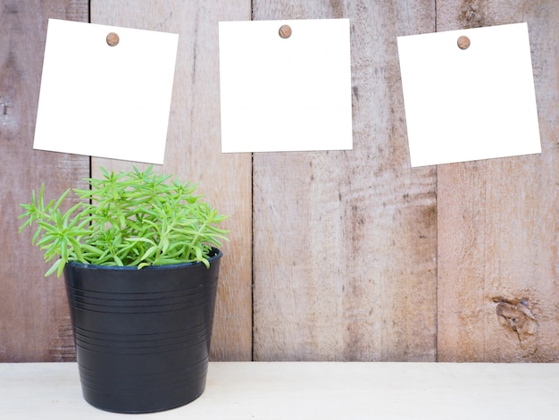Small plant and white note papers on wooden background