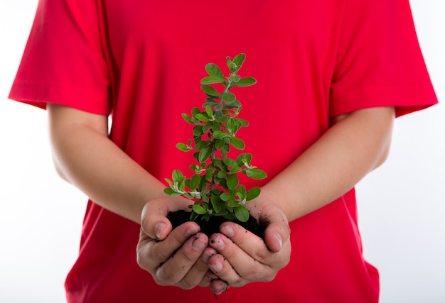 手の中に土壌と小さな植物