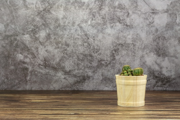 Small plant in wooden pot. - succulents or cactus on the desk in the room.