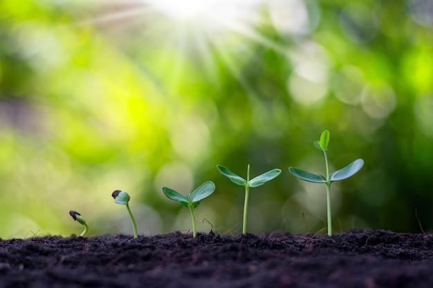 ぼやけた植生の背景と太陽光線のある土壌で成長している小さな植物