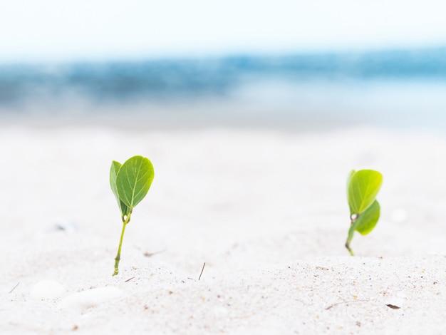 Small plants grow on the beach.