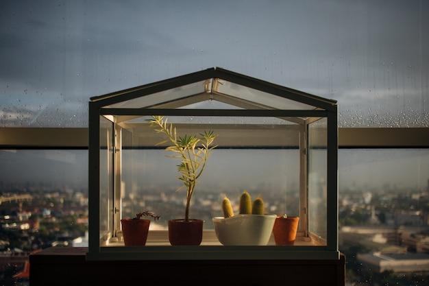 유리 집에 작은 식물.