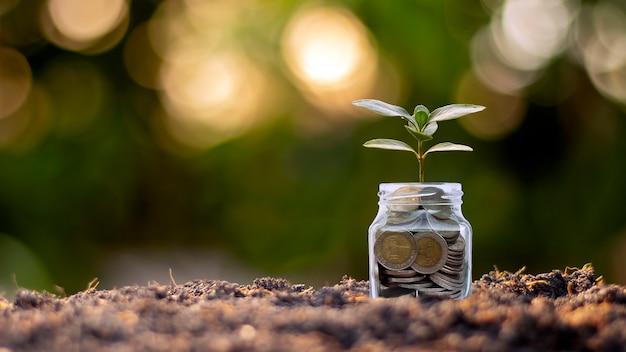 ボトルマネー、土壌上のコイン、ビジネスおよび投資の成長のアイデアを育てる小さな植物。