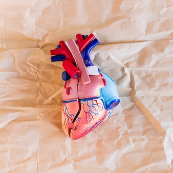 Small plastic human heart on paper