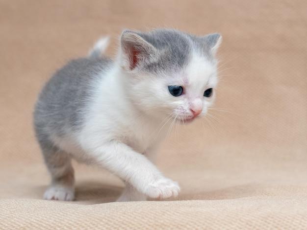 밝은 배경에 작은 장난 새끼 고양이.