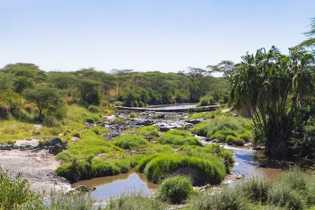 Небольшой пруд среди саванн африки. серенгети, танзания
