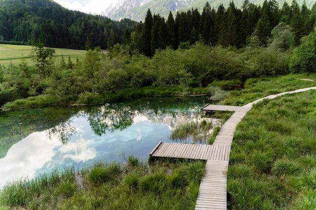 슬로베니아 트리글라브 공원의 나무 근처에 있는 작은 연못