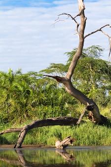 Небольшой пруд с сухим деревом. серенгети, танзания