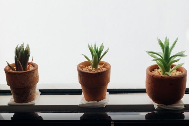 Small pot of haworthia on the edge of windows.