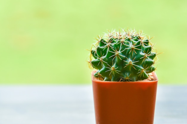 Small potted cactus on green background / cactus in a pot