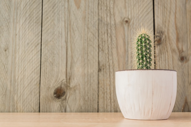 Small potted cereus cactus on wooden background