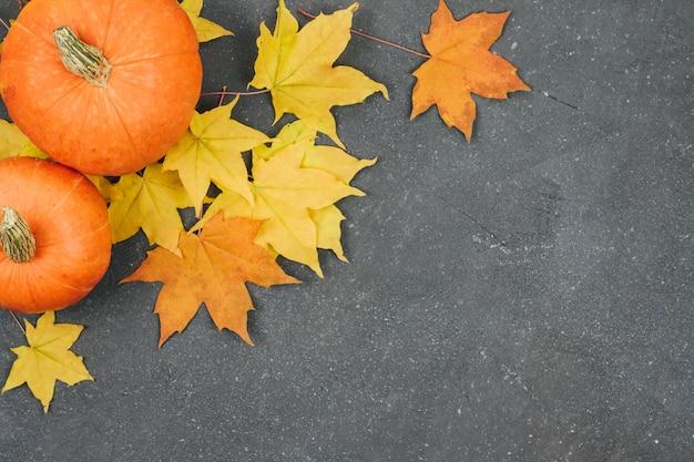 Small pumpkins and yellow maple leaves on a dark gray textured background
