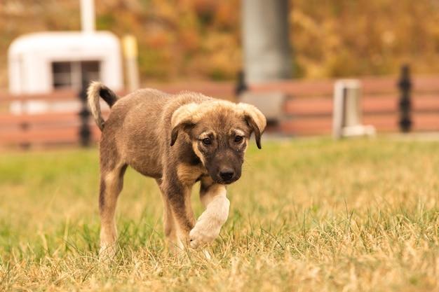 Маленький щенок в поисках еды грустная одинокая бездомная собака приют для собак на заднем дворе