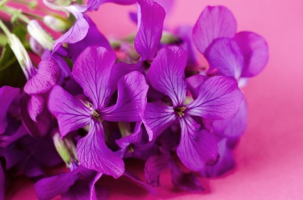 색상 배경에 대해 작은 보라색 꽃 봄 보라색 플록스 꽃