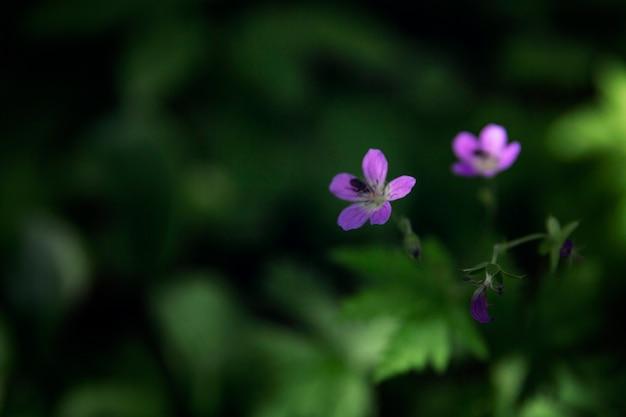 숲에 작은 보라색 꽃. 확대. 선택적 초점입니다.