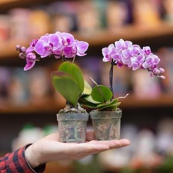 手に小さな紫蛾蘭の花植物