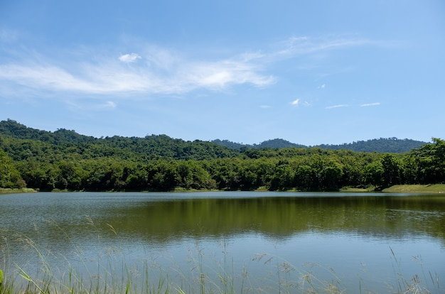 The small quiet lake of the reservoir with the grass flower in the foreground in a valley amidst the meadows and forests of the national park during the summer, front view with the copy space.