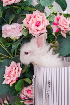 Small rabbit in a basket on a background of flowers. fluffy easter bunny