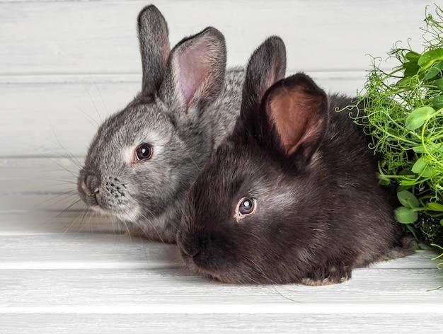 明るい表面の小さなウサギ。閉じる。