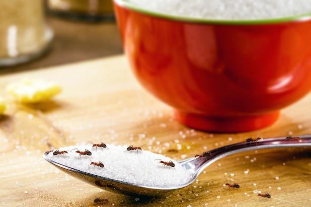 砂糖を入れたスプーンの小さな赤いアリ、屋内での害虫の問題