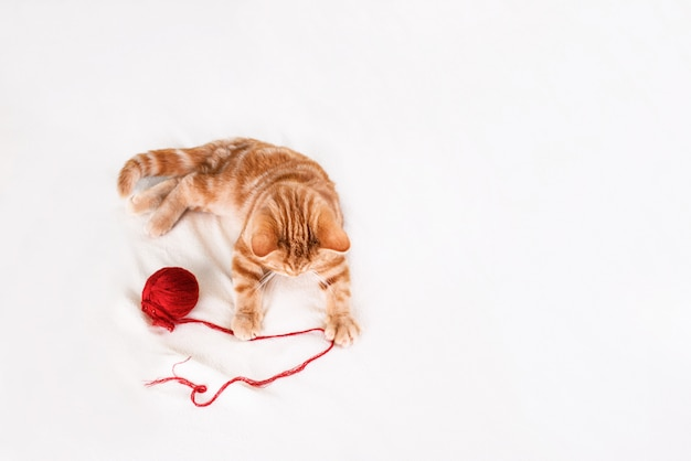 A small red-haired kitten on a light bed lies with threads. place for text
