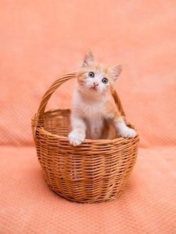 작은 빨간 고양이는 주황색 배경에 고리버들 바구니에 앉아 있습니다. 애완동물