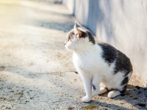 シエスタの時間に小さなリラックスした猫、好奇心旺盛な子猫