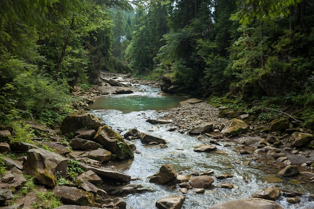 거친 돌계곡을 빠르고 생생하게 흐르는 작은 강