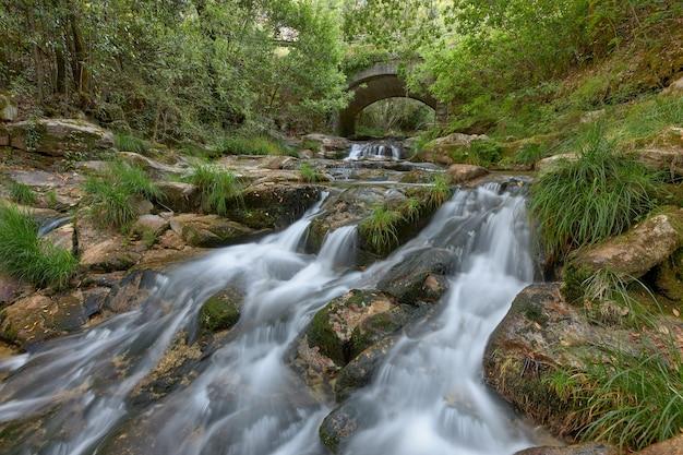 森の真ん中にある古い石橋の下を流れる小さな川