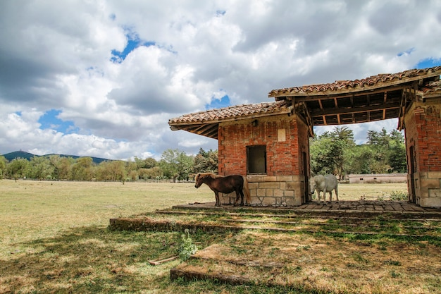 サルデーニャの小さな馬が地中海の田園風景の古い構造物の下で太陽から避難