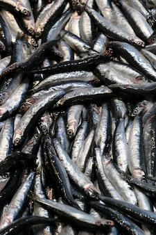 魚市場のカウンターにある小さな海の魚