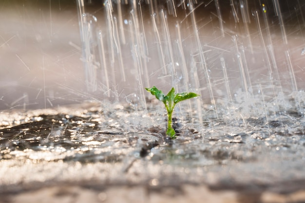 나무 죽은 나무에 물을주는 작은 묘목과 정원에서 저녁에 새로운 새싹에 떨어지는 물방울