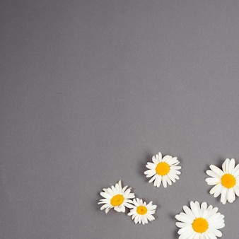 Small set of daisies scattered in corner