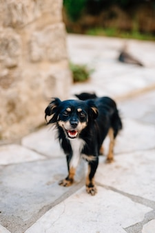 小さな毛むくじゃらの黒い雑種犬が外でクローズアップ。高品質の写真