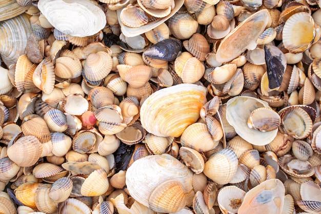 Small shells background in skane, sweden