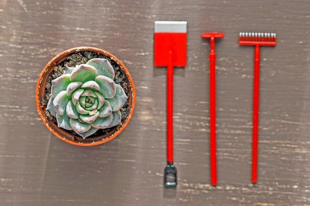 Маленькая лопата грабли мотыга и комнатное растение на деревянном столе