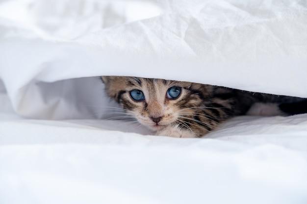 Small smiling striped kitten lying on back sleeping on white blanket.