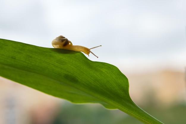 흐릿한 아침 배경에 녹색 잎에 들어온 작은 달팽이