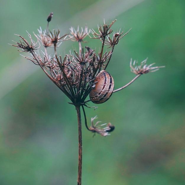 庭の小さなカタツムリ
