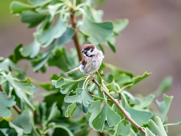 Маленький воробей сидит на ветке дерева с зелеными листьями на нем