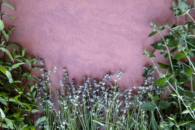파란색 배경 평면보기에 작은 향신료 허브 정원