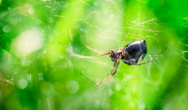 ボケ味とコピースペースのある緑の焦点がぼけた背景のウェブ上の小さなクモ